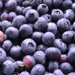 NewJerseyBlueberries